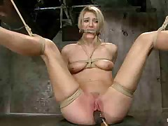Amanda Tate is what bondage riggers call fresh meat. And nailing this snatch..